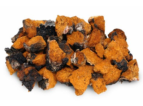 Chaga Mushroom Powder (Concentrate 4:1)