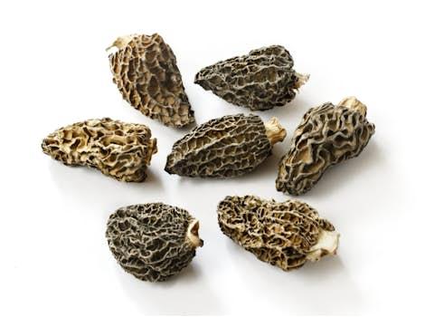 Dried Premium Morel Mushrooms