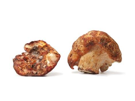 Dried Lobster Mushroom