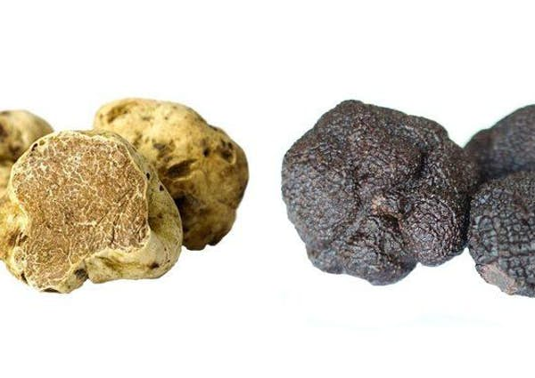 Truffles and Truffle Products